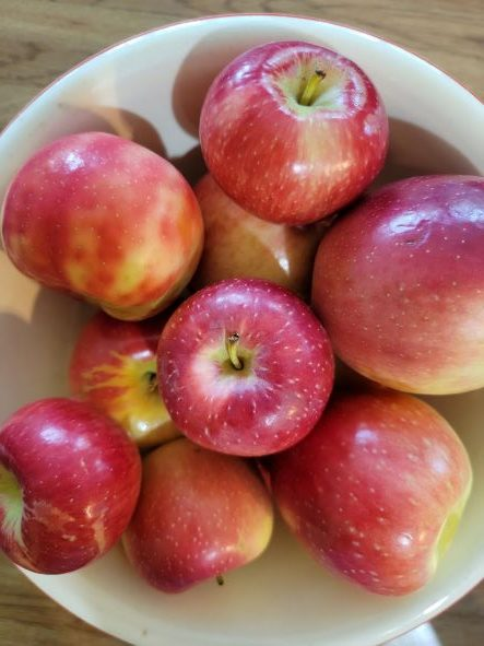 bowl of apples from orchard
